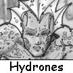 Hydrones